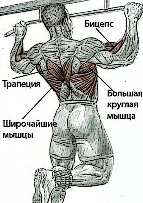 мышцы задействованные в подтягивании