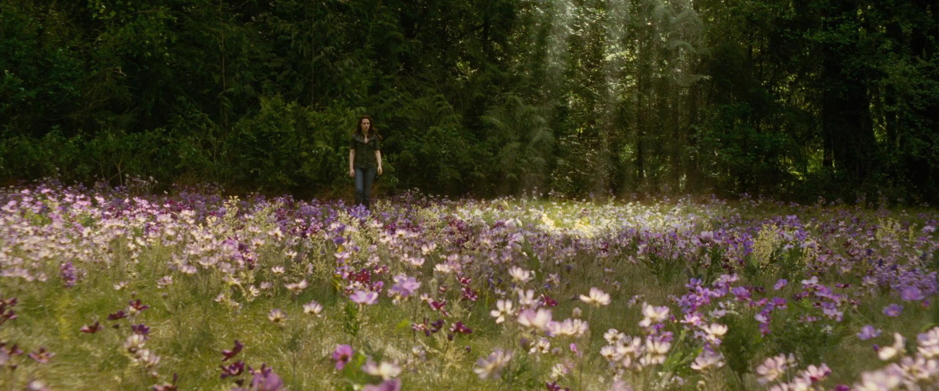 сказочные цветущие луга