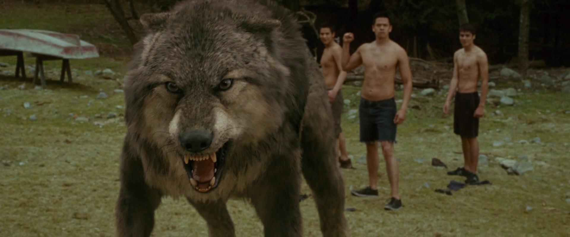 суровые и невероятно милые оборотни волки