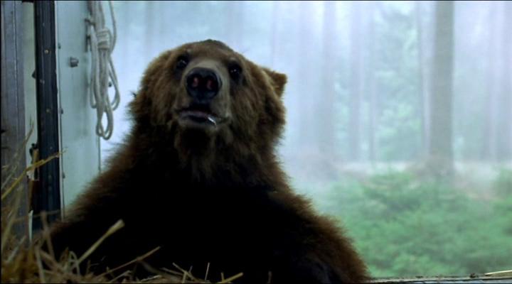 медведь самый эмоциональный в фильме