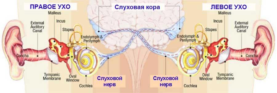 бинауральный слух