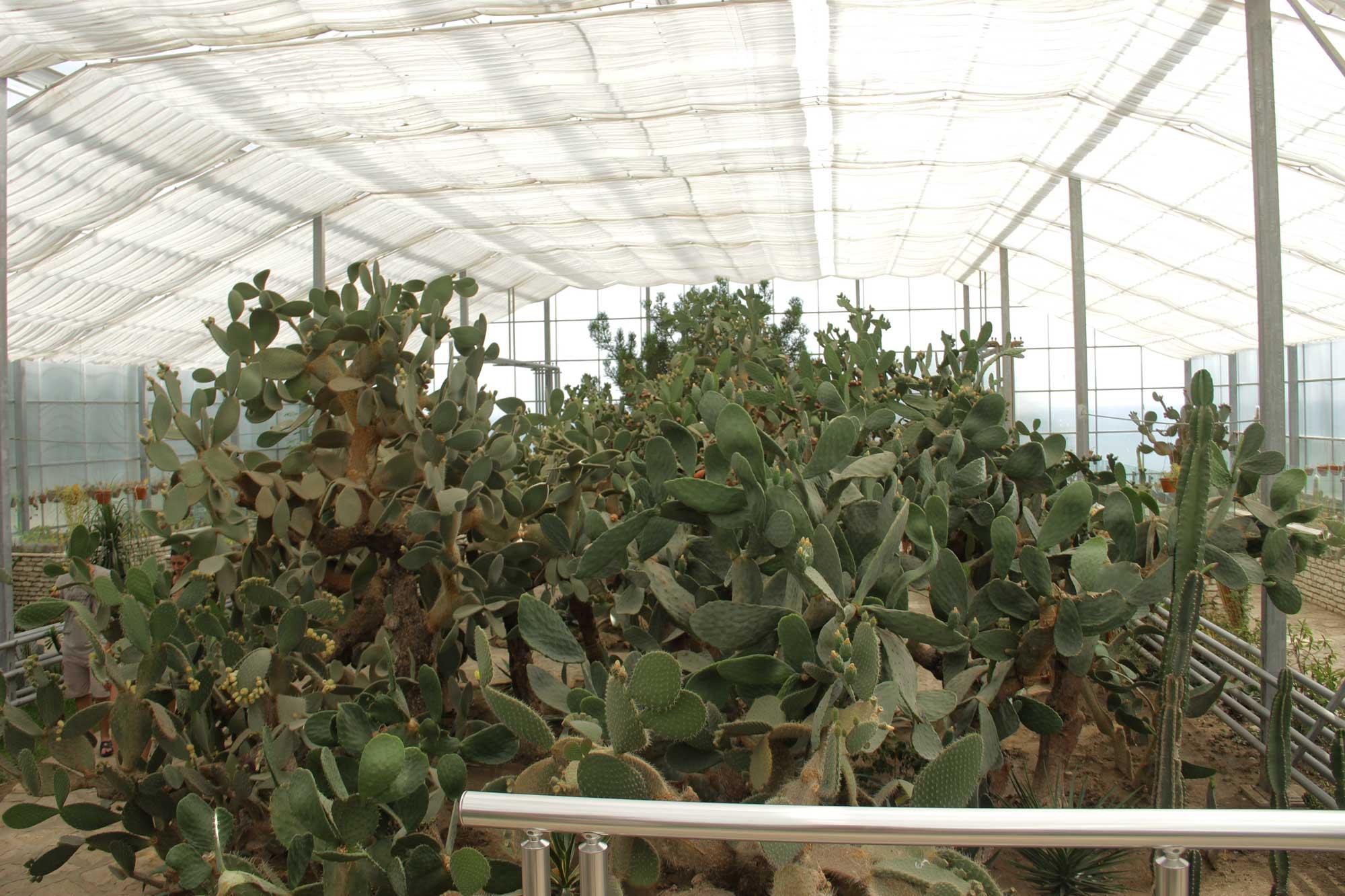 гигантская аранжерея с кактусами в бот саду
