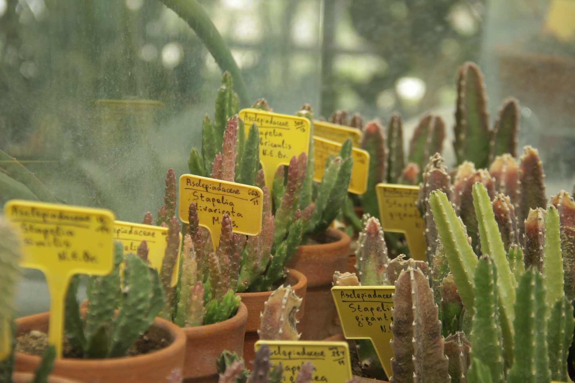 кактусов тоже бывает много