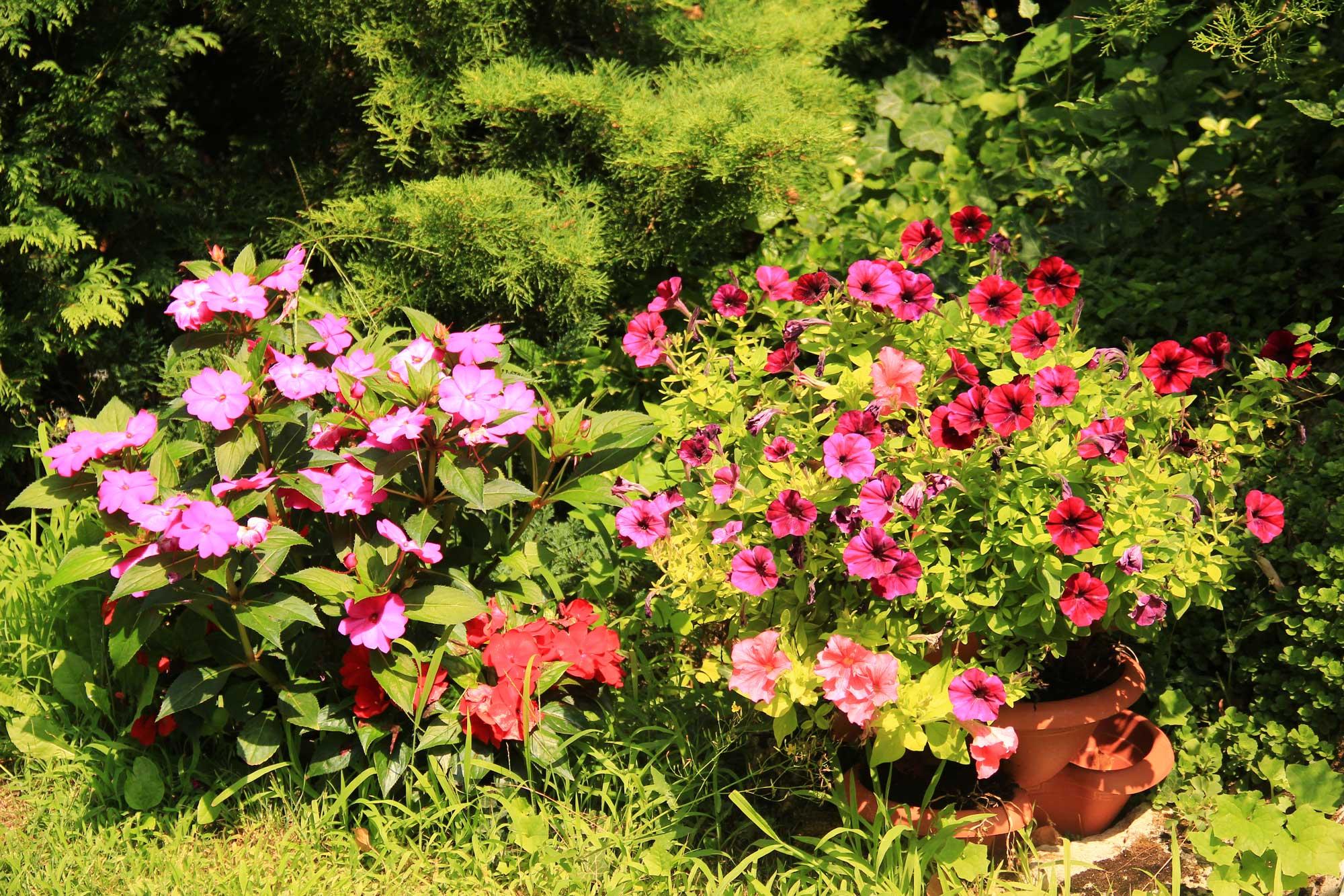 пышные цветники на территории аладжо