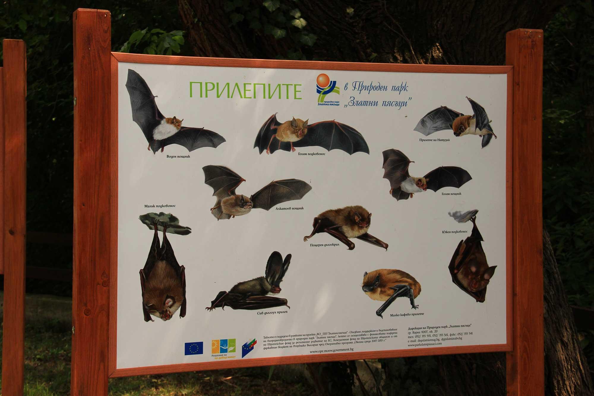 разновидности летучих мышей заповедной зоны