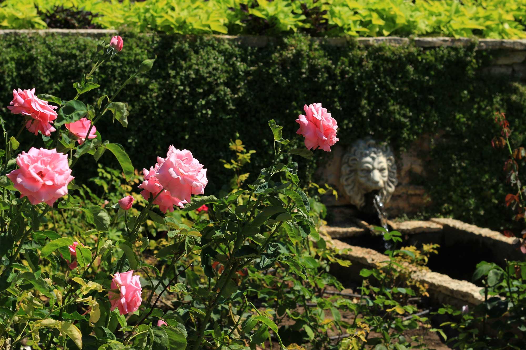 розами усыпан весь ботанический сад