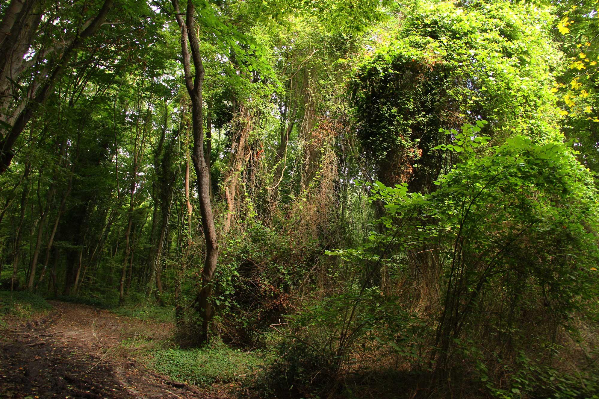 шикарный заповедный лес