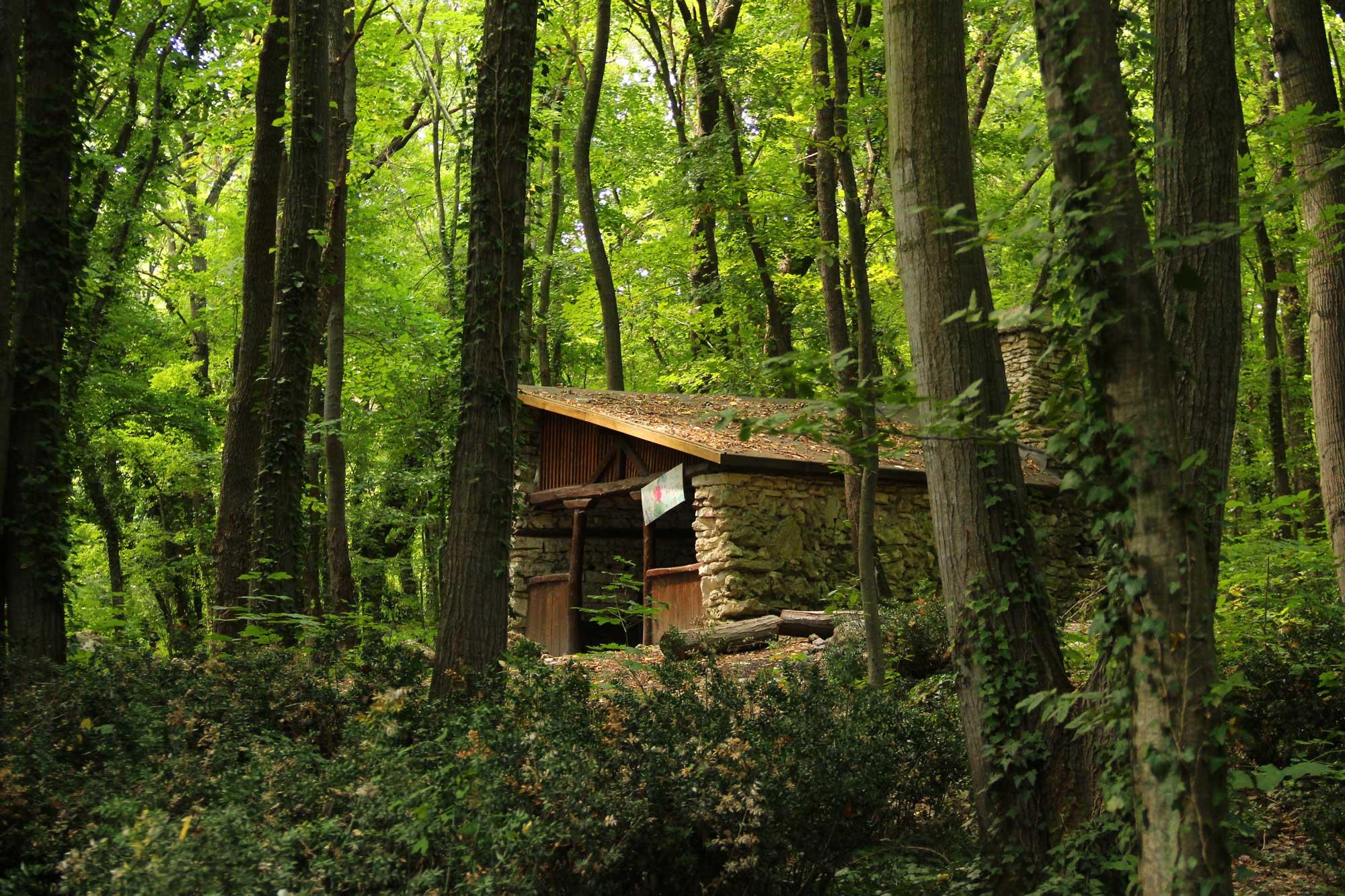 заброшенные строения в лесу