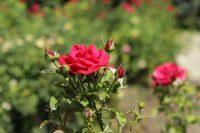 путешествие в болгарию вечно солнечная и цветущая долина роз