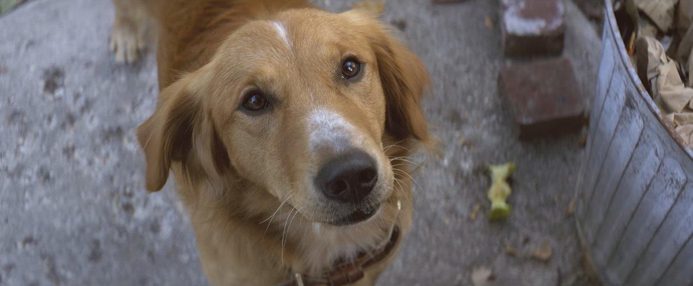 главный герой истории пёс бейли