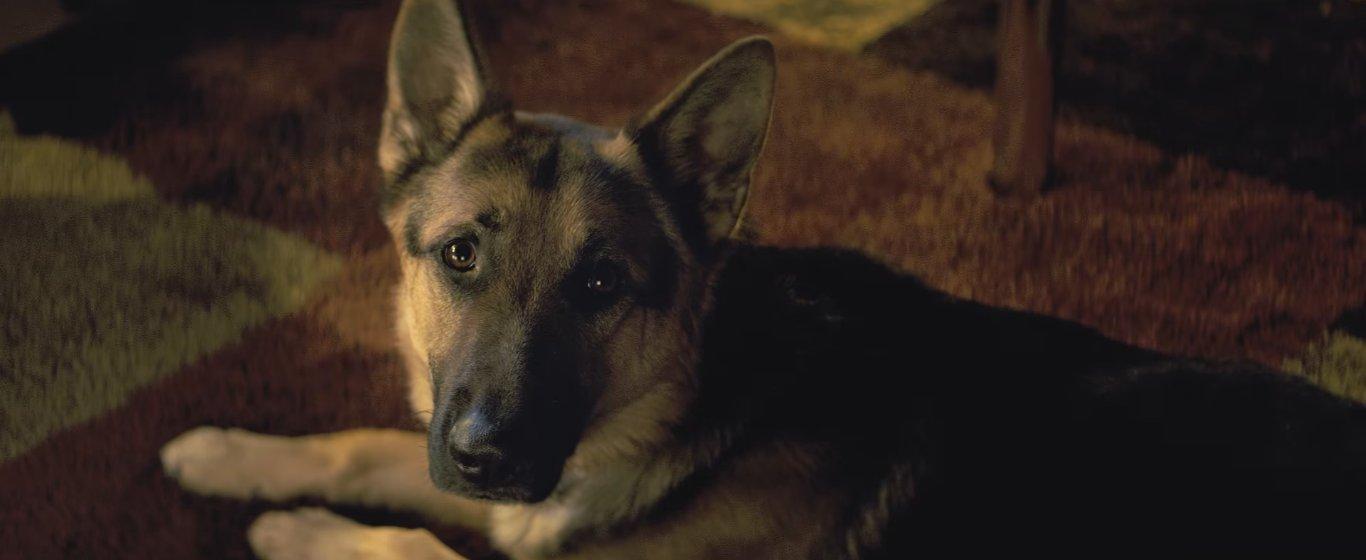 искренность и выразительность в глазах собак