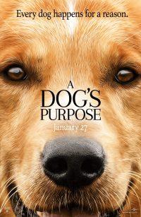 обзор фильма собачья жизнь