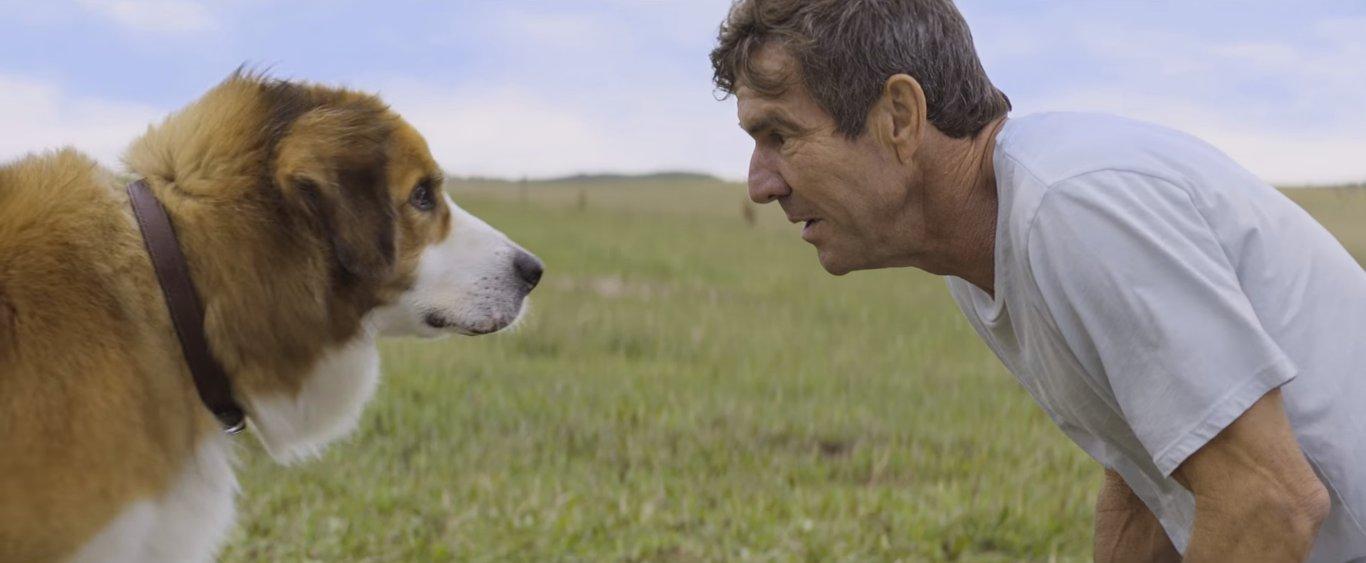 проникновенная игра людей и собак