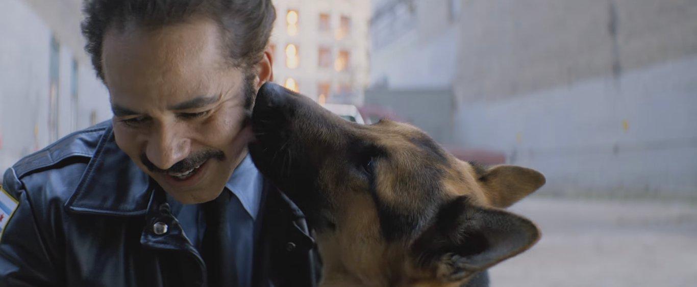 трогательные эпизоды с собачками